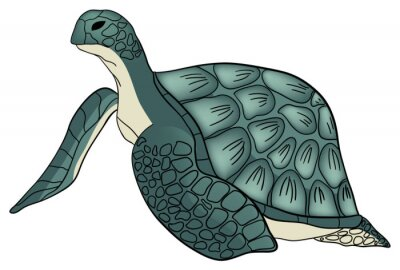 Vector illustration. Color sea turtle isolated white background