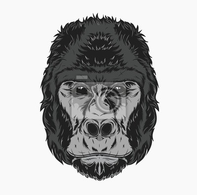 Vector illustration, gorilla head on a white background. Can be used for printing on T-shirts, flyers, etc. Vector illustration