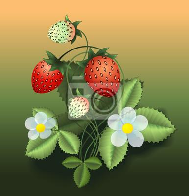 Vector illustration of strawberry bush