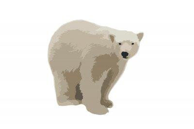 Vector illustration polar bear on isolated white background. White bear