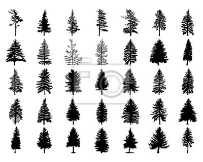 Fototapete Vector set Silhouette der verschiedenen kanadischen Kiefern. Nadelbaum Silhouetten auf dem weißen Hintergrund Sammlung. Bündel von Bäumen.