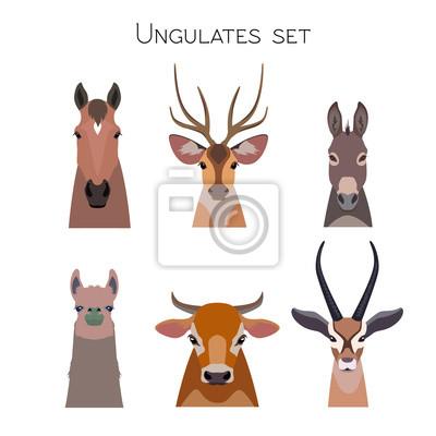 917459720f9bb Fototapete Vector Tiere Köpfe gesetzt. Lama Rotwild Antilope Esel Pferd Kuh