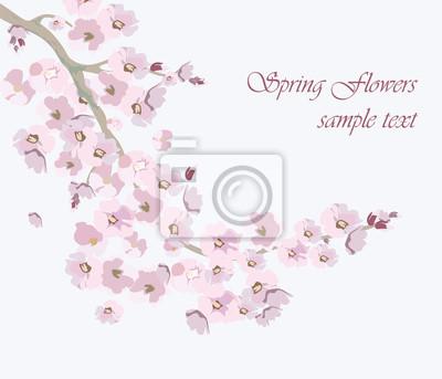Vector Vintage Cherry Blumen Hintergrund Illustration Von