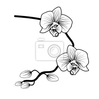 vektor der orchidee blume auf wei em hintergrund fototapete fototapeten orchidee gezeichnet. Black Bedroom Furniture Sets. Home Design Ideas