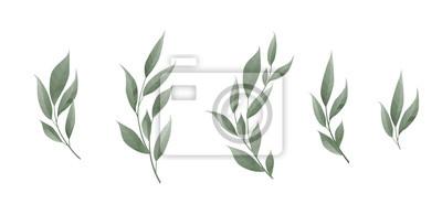 Fototapete Vektor festgelegt. Lorbeerblatt. Grünblätter auf weißem Hintergrund. Vektor-Illustration.
