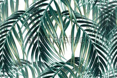 Fototapete Vektormusterhintergrund der nahtlosen Vektor der tropischen Palmblätter