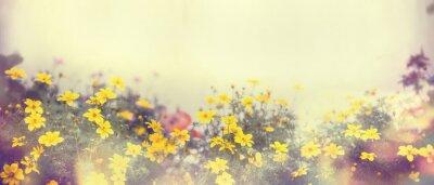 Fototapete Verschiedene bunte Frühlingsblumen im Sonnenlicht, Unschärfe, Banner für Web-Site, Grenze