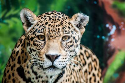 Fototapete Verspotten die Jaguar
