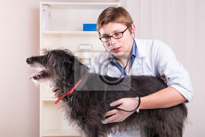 Vet Prüfung eines Hundes mit einem Stethoskop im Büro