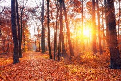 Fototapete Vibrant Sonnenuntergang im Herbst Wald