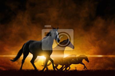 Vier laufende schwarze Pferde