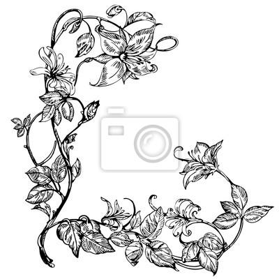 Vintage Elegante Blumen Schwarz Weiss Vektor Illustration Geissblatt