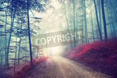 Fototapete Vintage Farbe Effekt Herbst Wald Straße mit Fantasy Licht. Vintage Filtereffekt verwendet.