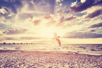 Fototapete Vintage getönten Sonnenuntergang über Meer mit fliegenden Vogel vor.
