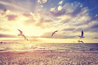 Fototapete Vintage getönten Strand mit fliegenden Vögeln bei Sonnenuntergang