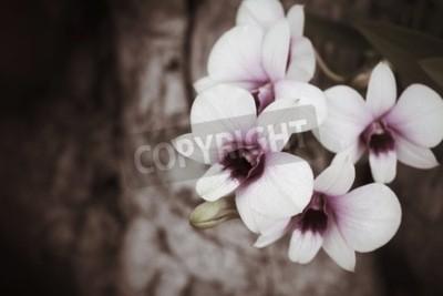 Fototapete Vintage Orchideenblüten