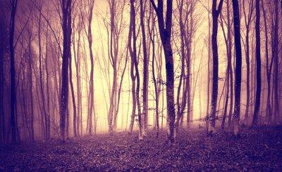 Fototapete Vintages lila gelbes mystisches Licht in der beängstigenden Waldlandschaft.