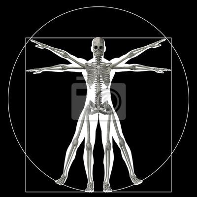 Vitruvian mensch oder mensch konzeptionelle 3d-verhältnis anatomie ...