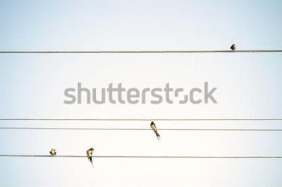 Fototapete Vogel-Tits, die auf minimalistic Frühlingshintergrund der Drähte sitzen