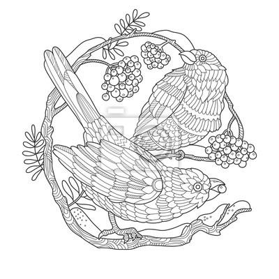Vögel und Vogelbeeren Färbung Buch Vektor-Illustration