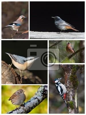 Vorstands Vögel