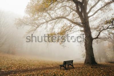 Fototapete Wald in Herbststimmung mit Nebel und Sonne