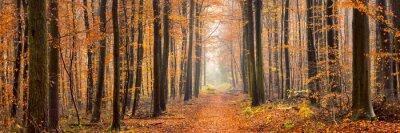Fototapete Wald Panorama im Herbst