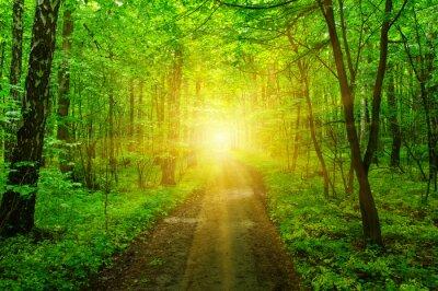 Fototapete Wald und Sonne