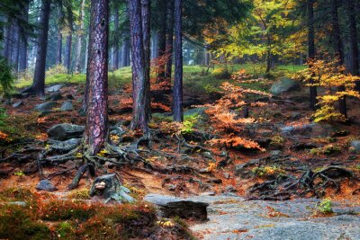Fototapete Waldunterholz auf Gebirgssteigung