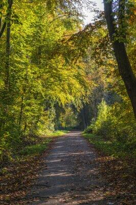 Fototapete waldweg  Waldweg fototapete • fototapeten Seitenlicht, aufrecht, Sonnenschein ...