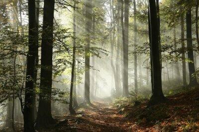 Fototapete waldweg  Waldweg im nebel in der sonne umgeben fototapete • fototapeten ...