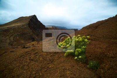 Wandern / Wanderweg Auf einer Klippe auf Madeira, Sao Lourenco