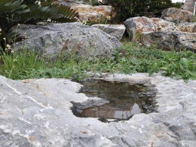 Wasser auf den Steinen mit Blumen um sie herum.