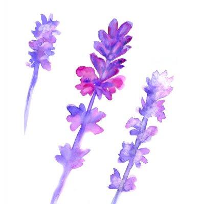 Fototapete Wasserfarben-Lavendelset