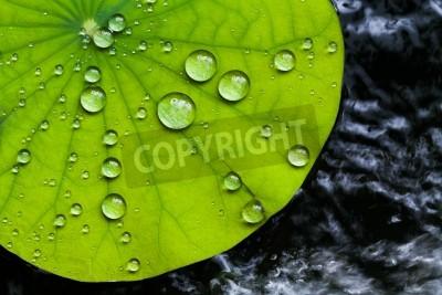 Fototapete Wassertropfen auf Lotusblatt
