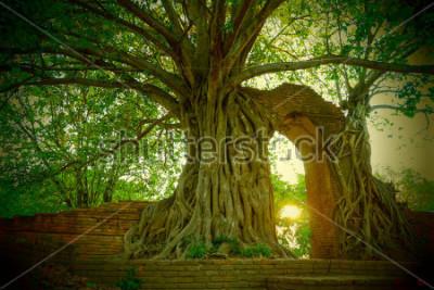 Fototapete Wat Phra Ngam (aufgegeben) Ayutthaya Tor der Zeit Der Bogen ist von der Pho umgeben.