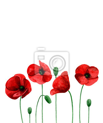 Watercolor Poppies Red Flowers Bouquet Greeting Card Design