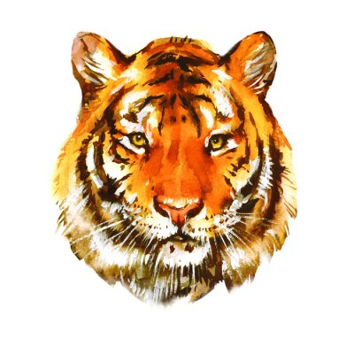 Watercolor tiger portrait. Realistic painting on white background.