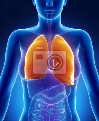 Weibliche anatomie lunge vordere ansicht fototapete • fototapeten ...