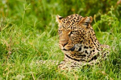 Fototapete Weibliche Leopardenporträt