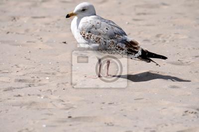 Fototapete Weiß Braun Beige Möwe Am Strand