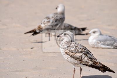 Fototapete Weiß Braun Beige Möwen Am Strand
