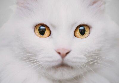 Fototapete weiße Katze