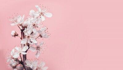Fototapete Weiße Kirschblüte Am Pastellrosa Hintergrund, An Der  Frühlingsnatur Und An Den Feiertagen Planen