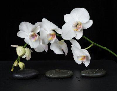Fototapete Weiße Orchidee auf einem schwarzen Hintergrund