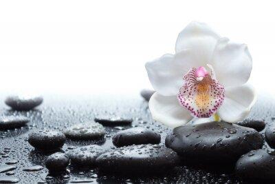 Fototapete weiße Orchidee und nassen schwarzen Steine