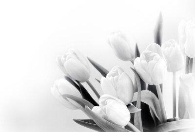 Fototapete Weiße Tulpen auf weißem Hintergrund bw