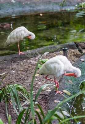 Weiße Vögel pflegen