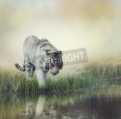 Fototapete Weißer Tiger In Der Nähe Von Einem Teich