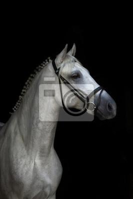 9d4b1956c65ae Weißes pferd porträt auf schwarzem hintergrund fototapete ...
